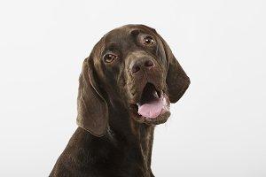 Studio portrait of an expressive ger