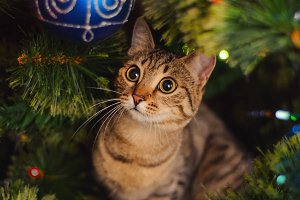 Сute cat Christmas
