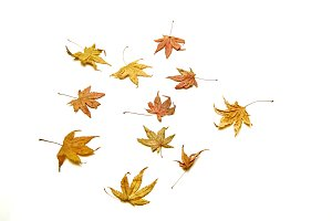 Autumn background falling leaves