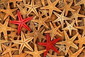 Stars,Stars,Stars