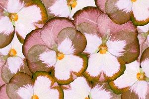 Pandora flowers )) 3