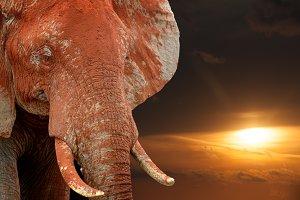 Elephant on savannah in Africa on su
