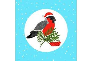 Bullfinch bird with Santa hat