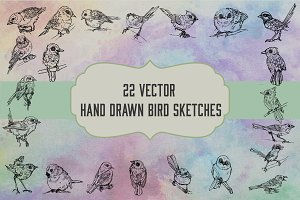 Vector Hand Drawn Bird Sketches