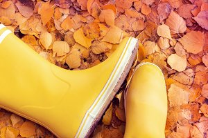 Autumn still life of yellow rubber