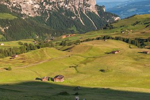 Horses at Seiser Alm in the Dolomite