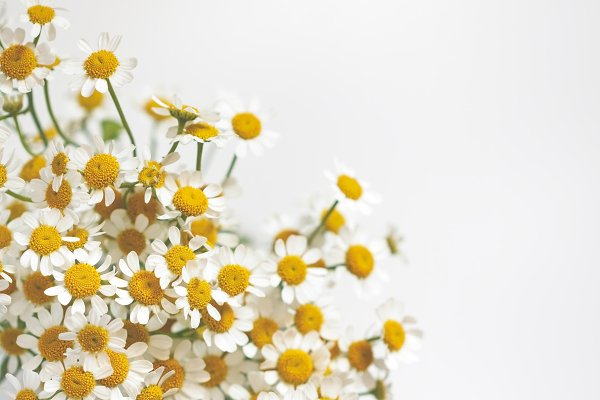Arts & Entertainment Stock Photos: Edalin's Store - Little daisy flowers bouquet