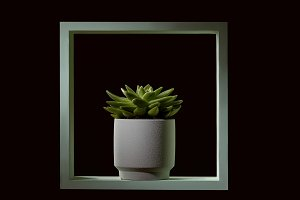 Wooden green frame with echeveria in