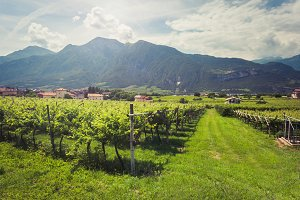 Vineyards of Trento.