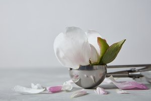 Delicate white flower peony in the