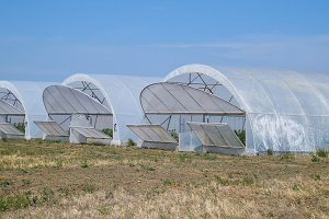A group of greenhouses for growing