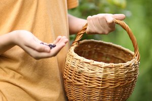human hand and basket harvest red