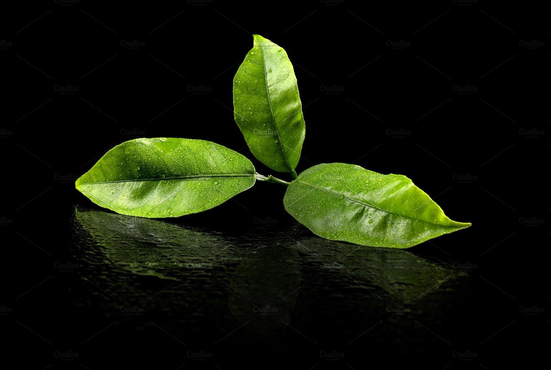 Green tea leaf ~ Food & Drink Photos ~ Creative Market