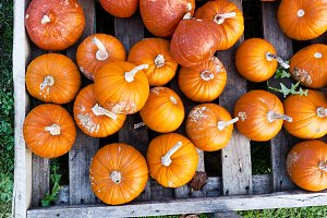 Autumn pumpkins top view