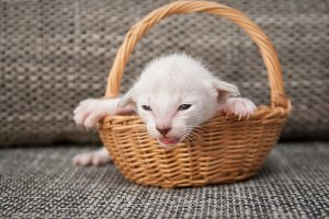 Funny kitten in the basket
