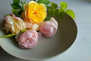 Roses in a grey bowl.