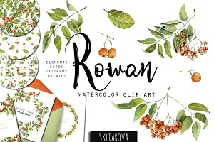 Rowan tree. Watercolor clip art.