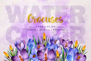 Blue and purple crocuses PNG set