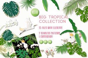 Tropical Plants and Birds Color Set