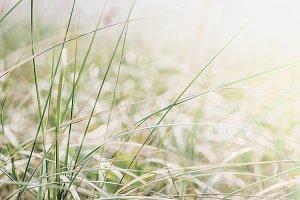 Natural grass autumn background