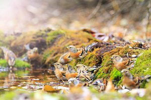autumn forest picture birds on a