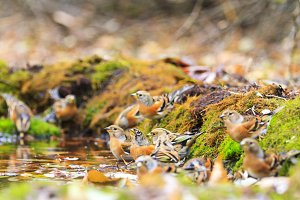 autumn forest picture birds on the