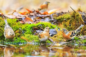 birds in autumn forest watering
