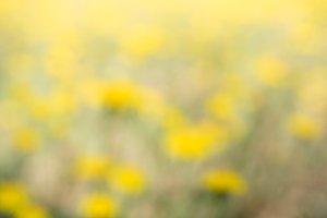 Impressionist yellow field
