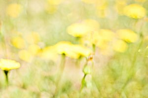 Impressionist Yellow field.