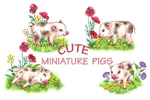 Cute Miniature Pigs