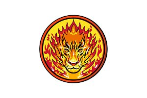 Flaming Tiger  Head Icon