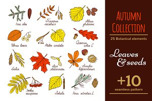Leaves and seed - Autumn Collection