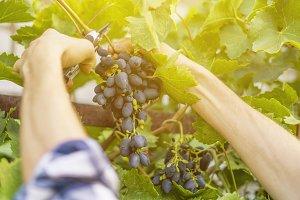 close up male gardener hands pick fr