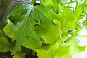 Container Gardening Mesclun Lettuce