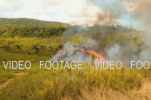 fire in a tropical bush