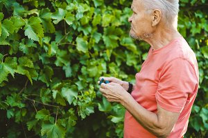 old senior man eating grapes berries