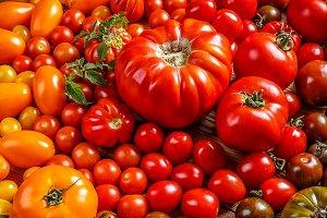 Colorful organic tomatoes