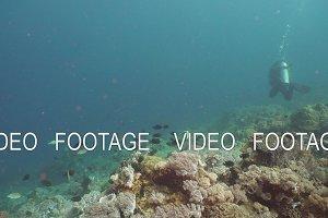 Scuba Divers underwater. Philippines