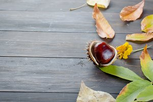 Autumn background with chestnut