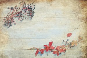 Autumn leaves and wild grapes on woo