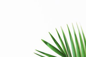 Portrait-mode Palm Leaf Stock Photo