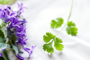 Parsley & Purple Campanula blossoms