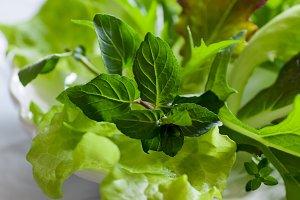 Mint, thyme & fresh mesclun lettuce
