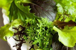 Mesclun Lettuce on a platter
