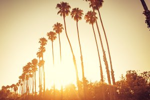 Palm trees in sunset in Santa Barbar