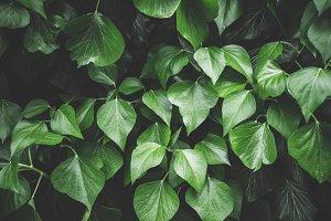 Leaf Leaves Background