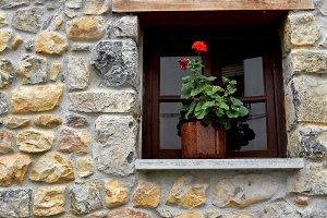window with flowers pot