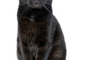 Portrait of a young black cat on whi