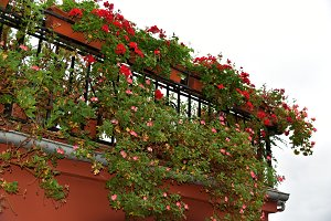 Balcony overflowing with flowers