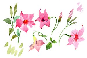 Wildflower pink dipladies PNG set